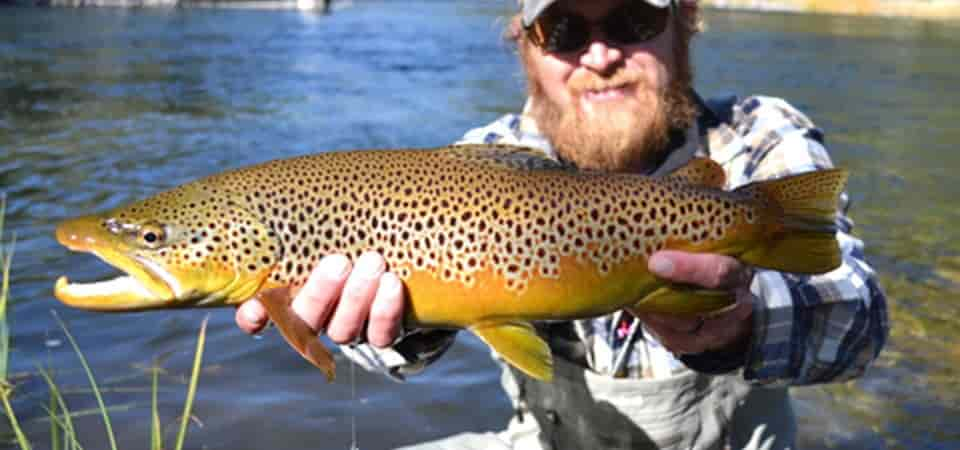 Study has found that brown trouts can hooked to meth which is present even in treated wastewater released in the environment (Pic: Courtesy nps.gov)