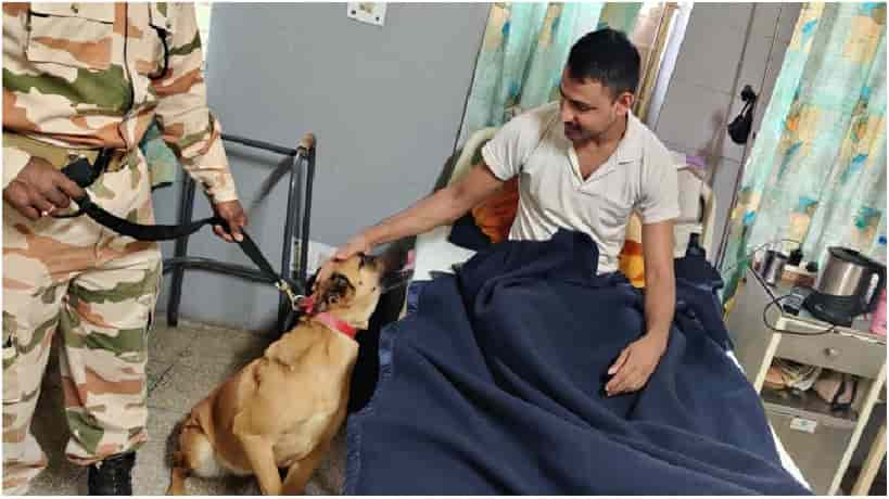 A retired ITBP K9 dog visiting a patient at the hospital (Pic: Courtesy tribuneindia.com)