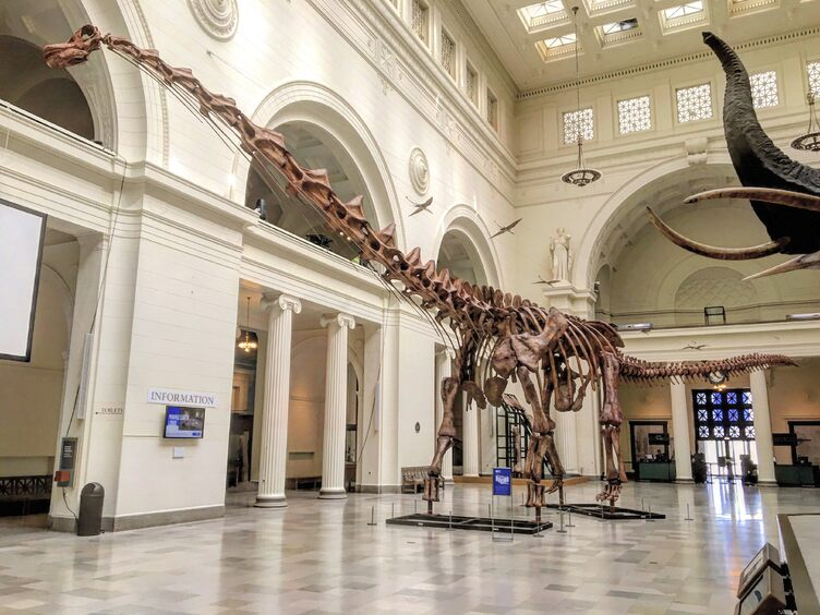 Image of the Titanosaur, Patagotitan, skeleton cast on display at the Field Museum of Natural History, Chicago (Pic: Courtesy Wikimedia Commons)