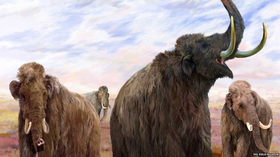 An illustration of mammoths of the Ice Age (Pic: Courtesy bbc.com)